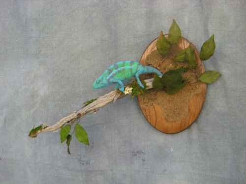 Panther chameleon mount; Denver, Colorado