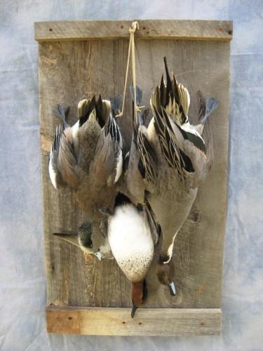 Dead puddle duck trio mount; Watertown, South Dakota