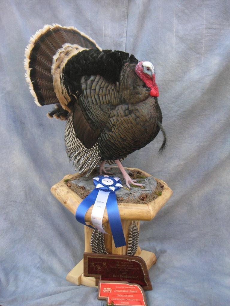 Showpiece Taxidermy: South Dakota's National Award-Winning Taxidermist