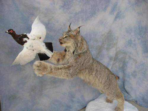 Lynx and ptarmigan mount; Alaska