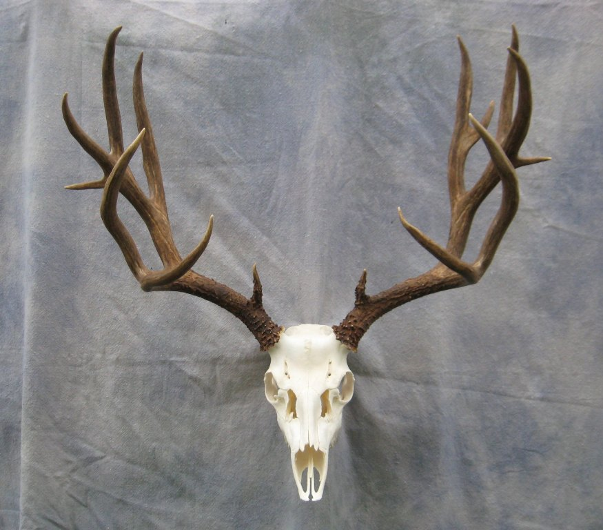 how to make a plaque for deer antlers