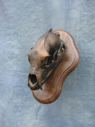 Bronzed black bear European skull mount; British Columbia, Canada
