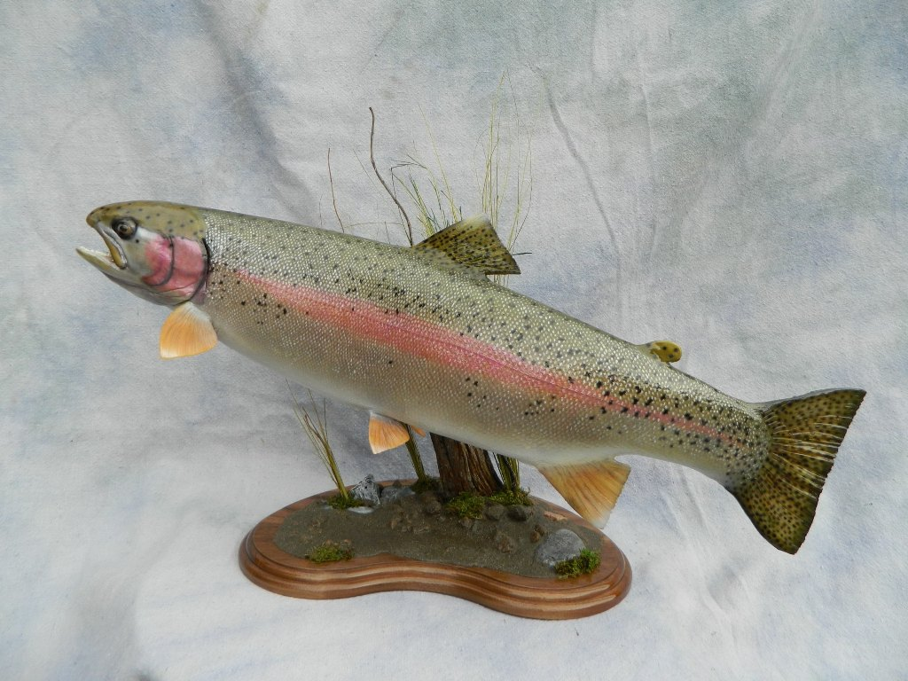 Showpiece taxidermy fish walleye trout crappie mounts for Best trout fishing in colorado