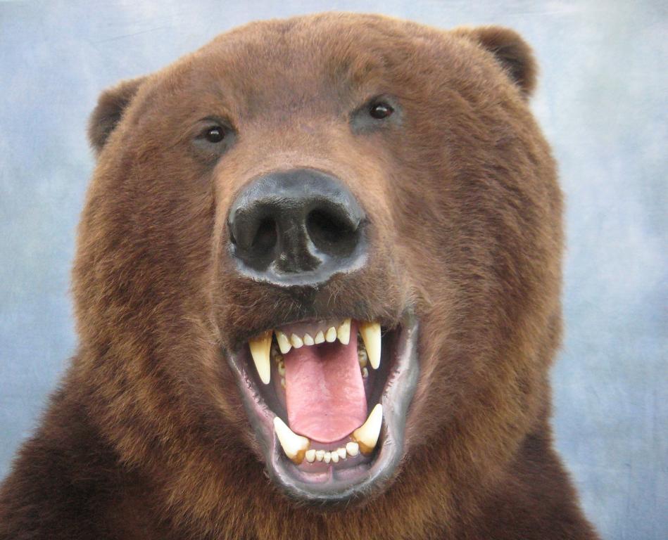 Showpiece Taxidermy: Bear, Coyote & Cougar Lifesize Mounts