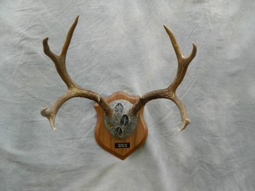 Deer antler plaque mount; Boulder, Colorado