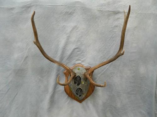 Deer antler plaque mount; Rocky Mountains, Colorado