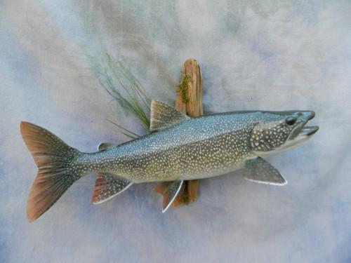 Lake trout skin mount; Decker, Colorado