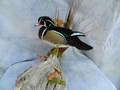 Showpiece Taxidermy Goose Wood Duck Amp Mallard Mounts
