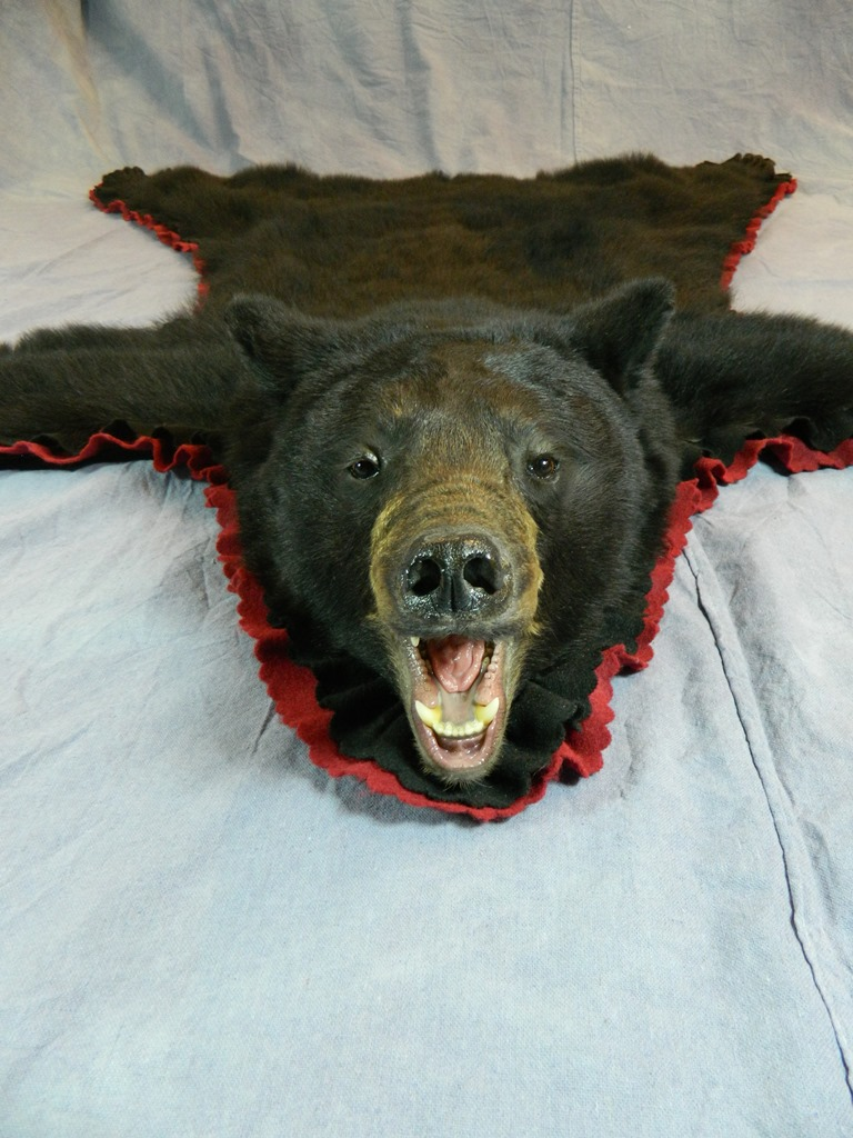 Showpiece Taxidermy Premium South Dakota Taxidermist In