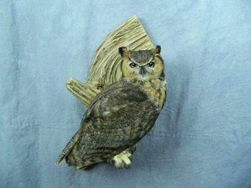 Great horned owl mount; Huron, South Dakota