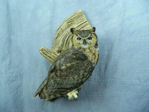 Great horned owl mount; Huron, South Dakota