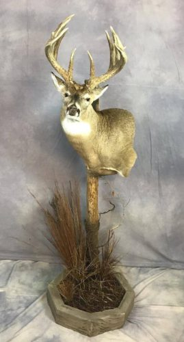 Custom White-Tailed Deer Pedestal Mount Brown County SD (1)