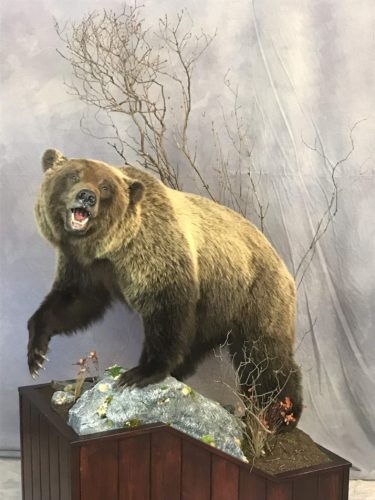 Life Size Grizzly Bear Floor Mount - British Columbia