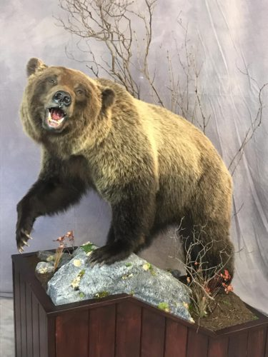 Lifesize Grizzly Bear Mount - Canada