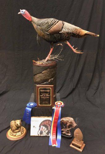 Turkey Mount; South Dakota Taxidermy Competition Awards