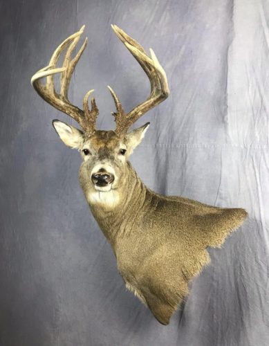 White-Tailed Deer Wall Pedestal Mount Eastern SD (2)